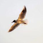 Przyroda - FotoAno