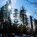 Przyroda plener - FotoAno