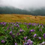 Dolina Chochołowska - FotoAno